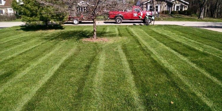 Organic Lawn Care St