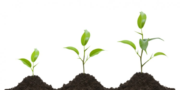 Organic business growth definition